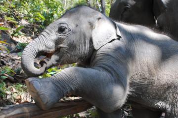 Can Elephants Learn To Dance?